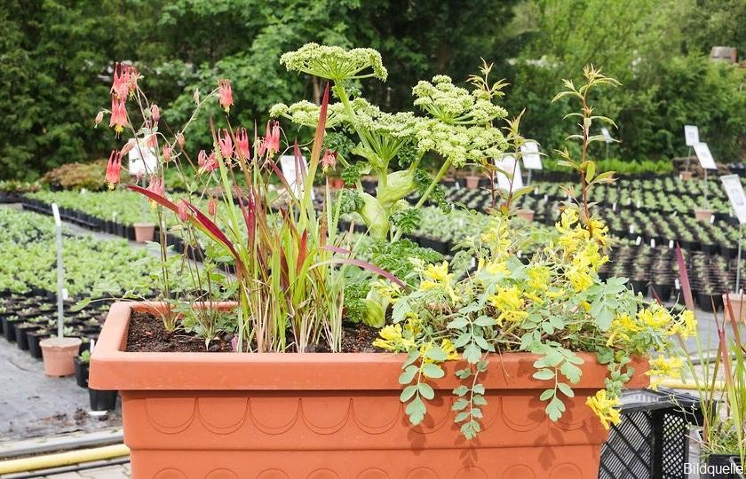 Balkonkasten bepflanzen