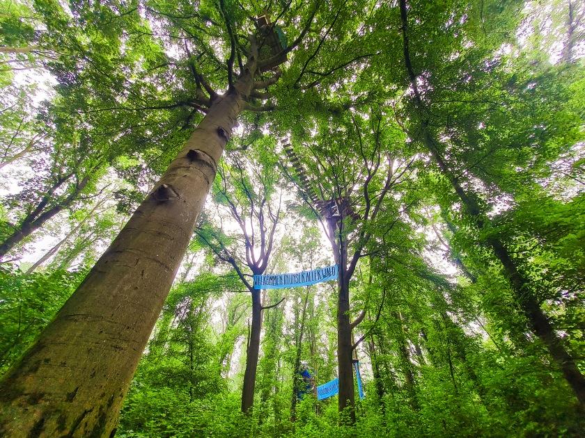 Baumhaus Unser Aller Wald Besetzung